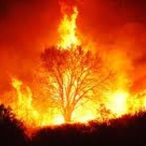 2tree-on-fire-1024x499