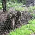 wildlife park fence