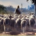 sheep follow Jesus