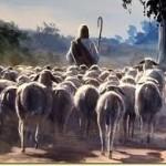 sheep follow Jesus